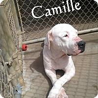Adopt A Pet :: Camille - Ozark, AL