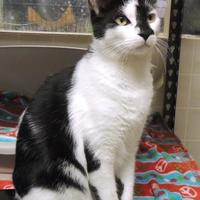 Adopt A Pet :: Slick - Westville, IN