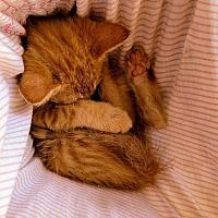 Adopt A Pet :: Punkin - Texarkana, AR