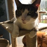 Adopt A Pet :: Belle - Fond du Lac, WI