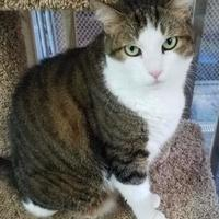Adopt A Pet :: Buster - Clearwater, FL