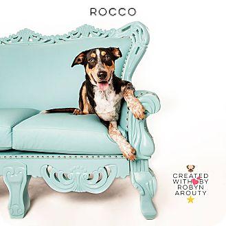 Blue Heeler/Shepherd (Unknown Type) Mix Dog for adoption in San Francisco, California - Rocco
