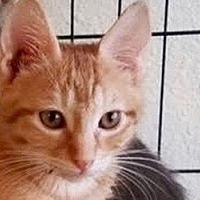 Adopt A Pet :: Ziggy - LaJolla, CA