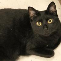 Adopt A Pet :: Marvin - Encinitas, CA