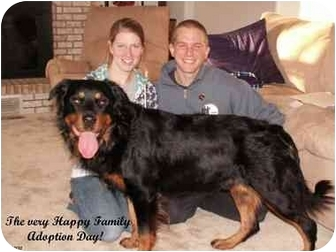 Rottweiler Dog for adoption in Darlington, Maryland - Cody/Blitz