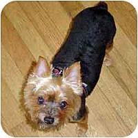 Adopt A Pet :: Wrigley - West Palm Beach, FL