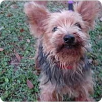 Adopt A Pet :: Bernie - Riverview, FL