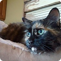 Adopt A Pet :: Critter - Chicago, IL