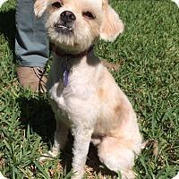 Adopt A Pet :: Benny - San Antonio, TX