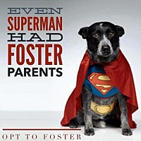 Adopt A Pet :: Zeek - Hastings, MN