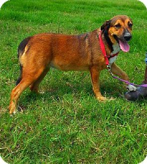 Collie Mix Dog for adoption in Huntington, New York - Francine & Phyllis - Bonded-N