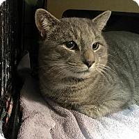 Adopt A Pet :: Big Foot - East Brunswick, NJ