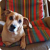Adopt A Pet :: Rattler - Burlington, NC