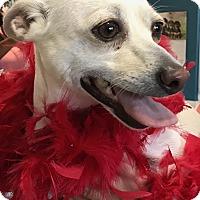 Adopt A Pet :: Cindy - San Antonio, TX