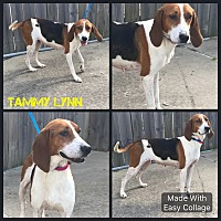 Adopt A Pet :: Tammy Lynn - Garden City, MI
