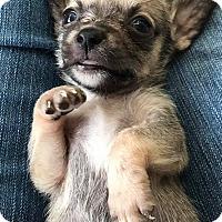 Adopt A Pet :: Peanut - Marlton, NJ