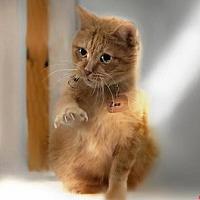 Adopt A Pet :: Zen - Montreal, QC