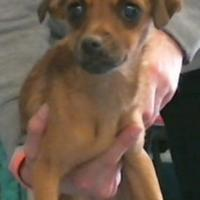 Adopt A Pet :: 155760 - Bakersfield, CA
