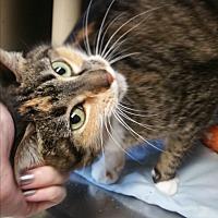 Adopt A Pet :: Ivy - Chippewa Falls, WI
