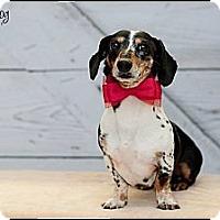 Adopt A Pet :: Buddie - Hilliard, OH