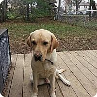 Adopt A Pet :: Marley - Hilliard, OH