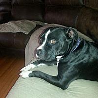 Adopt A Pet :: Sully - Lake Charles, LA