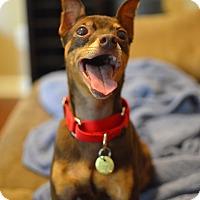 Adopt A Pet :: CeeCee - Nashville, TN