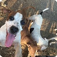 Adopt A Pet :: Judy - grants pass, OR
