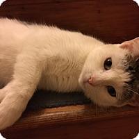 Adopt A Pet :: Diamond - Delmont, PA