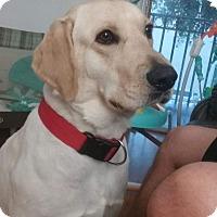 Adopt A Pet :: Boomer - Miami, FL