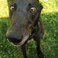 Adopt A Pet :: Leslie - Randleman, NC