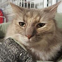 Adopt A Pet :: PJ - McPherson, KS