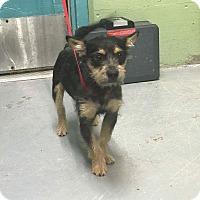 Adopt A Pet :: Leo - Middlebury, CT