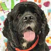 Adopt A Pet :: Fudge - Newington, VA