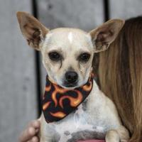 Adopt A Pet :: Theo - Heber City, UT