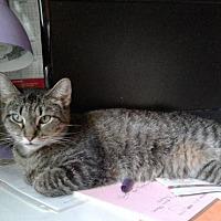 Adopt A Pet :: Petula - Columbus, OH