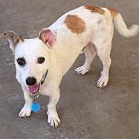 Adopt A Pet :: Rocky - Danbury, CT