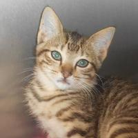 Adopt A Pet :: Alex - Wooster, OH