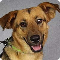 Adopt A Pet :: Kinsey - Minneapolis, MN