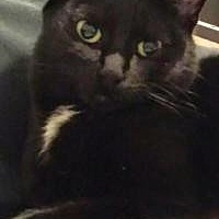 Adopt A Pet :: Luna - Livonia, MI