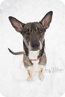 German Shepherd Dog/Husky Mix Dog for adoption in Drumbo, Ontario - Hope
