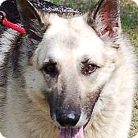 Adopt A Pet :: Sasha AD 04-22-17 - Preston, CT