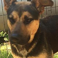 Adopt A Pet :: Khan (18 mo, 50 lb) - Grayson, KY