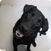 Adopt A Pet :: Gavin - Brooklyn Center, MN