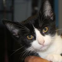 Adopt A Pet :: Andy - Robinson, IL