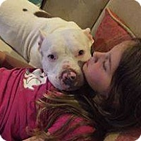 Adopt A Pet :: Prim - Lorain, OH