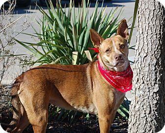 Shepherd (Unknown Type)/Australian Cattle Dog Mix Dog for adoption in White Settlement, Texas - Peaches/Delilah