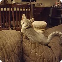Adopt A Pet :: Smokey - Berkeley Hts, NJ