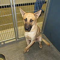 Adopt A Pet :: Salvator - Henderson, NC