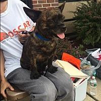 Adopt A Pet :: Pedro - Sparta, NJ